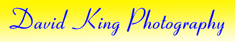 David king Photography Logo